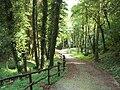 Spinone-parco-fontanino-alpini-06.jpg