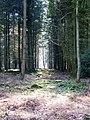 Spring sunshine in Godshill Inclosure - geograph.org.uk - 1745191.jpg
