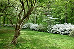 Springtime - Winterthur Museum - DSC01644.JPG