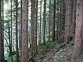 Spruce plantation. Glen Chia-aig - geograph.org.uk - 68209.jpg