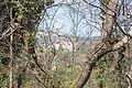 St Sernin dans les branches.JPG