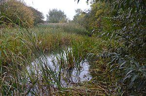 Stanground Newt Ponds - Image: Stanground Newt Ponds 6