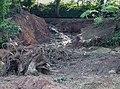 Stourbridge Canal Breach near Wordesley Junction - geograph.org.uk - 973462.jpg