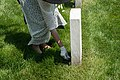 Strewing flowers 01 - Confederate Memorial Day - 2014 - Arlington National Cemetery.jpg