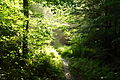 Sun-trail-forest-trees - West Virginia - ForestWander.jpg