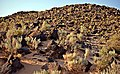 Sunset on a rocky hill - Petroglyph National Monument by Samat Jain.jpg