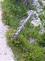 Swiss National Park 057.JPG