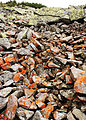Sywulja stone run red lichen.JPG