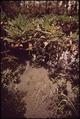 TAMIAMI CANAL AREA - NARA - 544541.tif