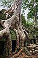 Ta Prohm Angkor foundations of stone.jpg