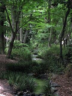 Tadasu no Mori forest associated to Shinto shrines in Kyoto, Japan