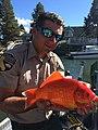 Tahoe Goldfish (30174960000).jpg
