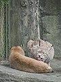 Taipei Zoo (24327782915).jpg