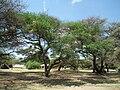 Tanzania 1580 Nevit.jpg