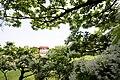 Taoyuan, Taoyuan District, Taoyuan City, Taiwan - panoramio (18).jpg