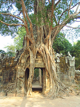 The third eastern gopura, with strangler fig