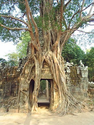 Ta Som - The third eastern gopura, with strangler fig