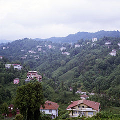 Tea plantation in Rize.jpg