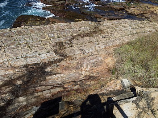 Tessellated pavement showing remarkably even joints - Bouddi National Park - New South Wales, Australia