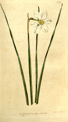 The Botanical Magazine, Plate 193 (Volume 6, 1793).png