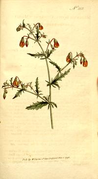 The Botanical Magazine, Plate 353 (Volume 10, 1796).png