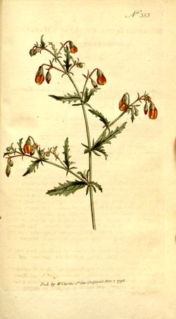 The Botanical Magazine, Plate 353 (Volume 10, 1796).png