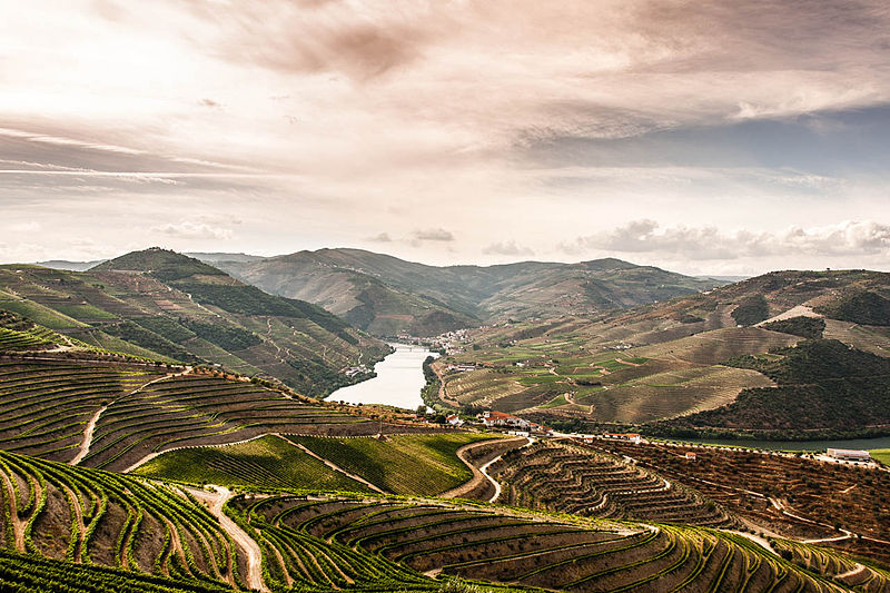800px-The_Douro_Valley_vineyards