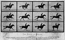 Image result for horse gaits creative commons