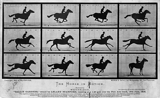 The Horse in Motion. Eadweard Muybridge, 1878. Public Domain Image.
