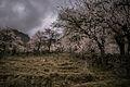 The Hunza Valley.jpg