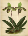The Orchid Album-01-0113-0037.png