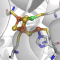 The active site of NiFe CO-dehydrogenase, an enzyme that reversibly oxidizes CO to CO2.png