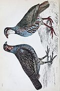 The animal kingdom - arranged after its organization; forming a natural history of animals, and an introduction to comparative anatomy (1863) (18194075582).jpg