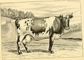 The breeds of live stock, and the principles of heredity (1887) (14594782339).jpg