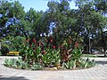The flower bed on the boulevard. August 2013. - Клумба на бульваре. Август 2013. - panoramio.jpg