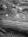 The ground beneath my feet (B&W) (2912769983).jpg