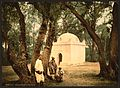 The sacred wood, Blidah, Algeria-LCCN2001697856.jpg