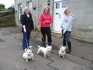"Selective breeding - Three generations of ""Westies"" in a village in Fife, Scotland"