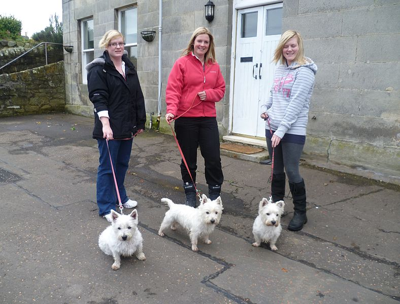 File:Three generations of West Highland Terrier.JPG