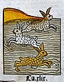 Three hares swimming in a river, woodcut, 1547 Wellcome L0029225.jpg