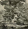 Through the wilds; a record of sport and adventure in the forests of New Hampshire and Maine (1892) (14586670598).jpg