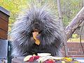 Tierpark Cottbus Urson.JPG