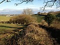 Top of the hedge, Combe Lane - geograph.org.uk - 1188400.jpg