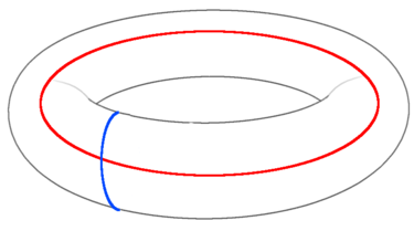 The topologically nontrivial loops of the torus. Moving anyons along these implement logical Pauli operators on the stored qubits. ToricCodeTorus.png