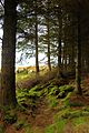Torr Righ and King's Cave trail, Arran 01.jpg