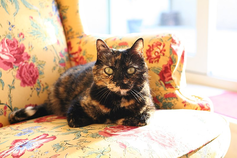 What Type Of Cat Is Black Spotted Cat Called