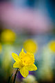 Touch of spring (2426712303).jpg