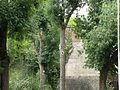 Tour de la Dodenne Valenciennes (arbres).jpg