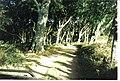 Track in Dunskey Glen. - geograph.org.uk - 259260.jpg