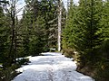 Trail near Sonnenkappe 03.jpg